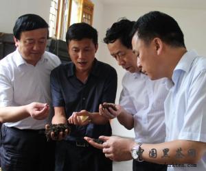 陕西省工商联主席冯钧平莅临泾渭茯茶项目:边销茶储备工作