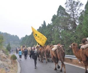 重走茶叶之路百峰骆驼进发韶山最后21公里