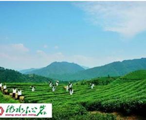 为什么安化黑茶最近10年升值380倍?
